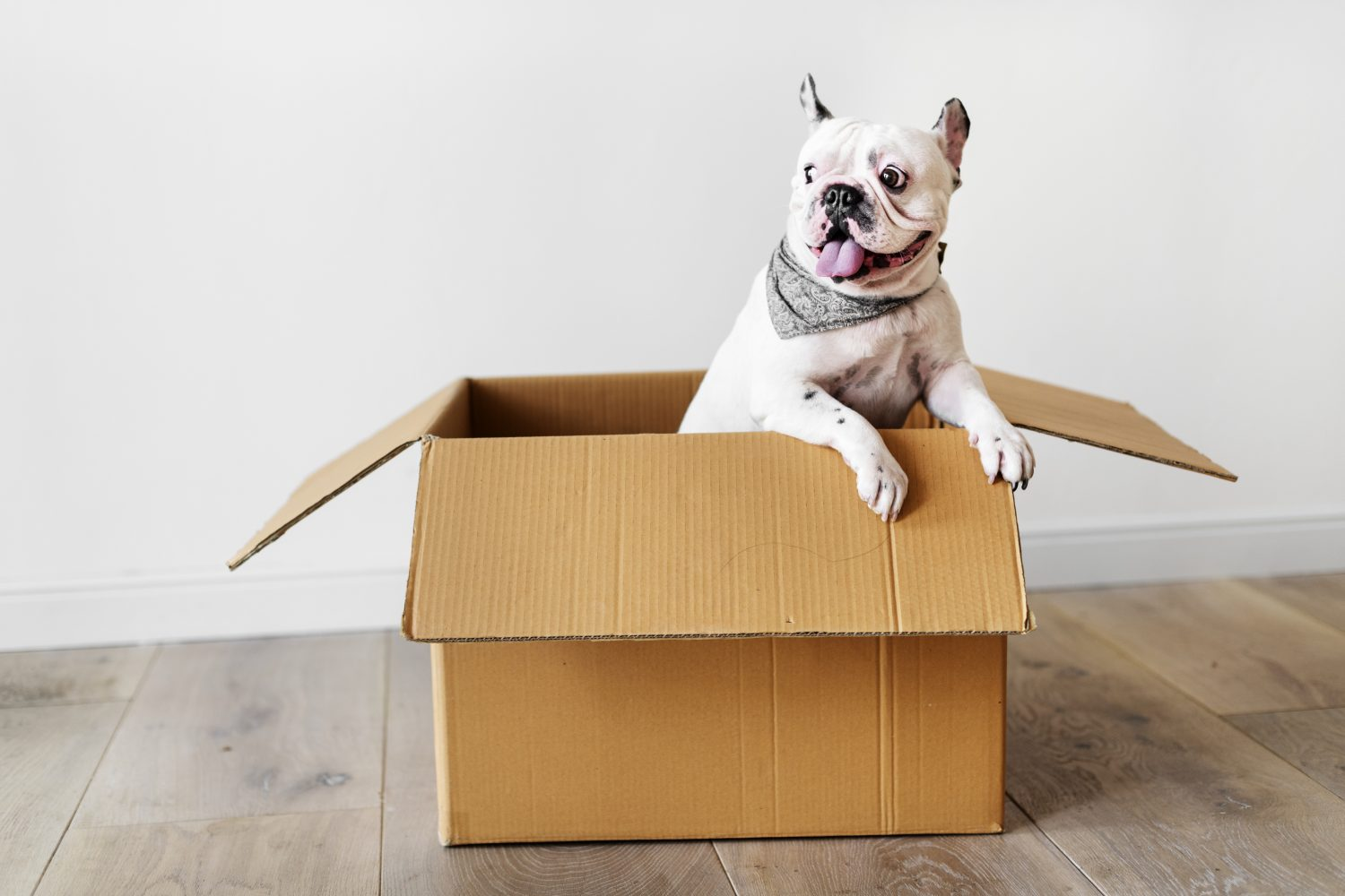 A white spotted dog in a cardboard box